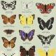 Lámina Butterflies